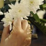 Mais fleurs Ciric 188486