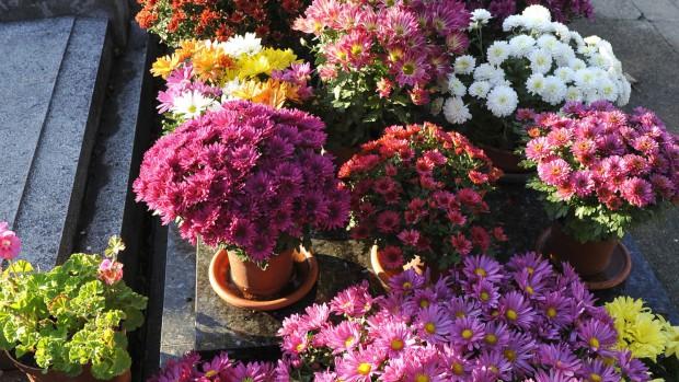fleurs cimetière