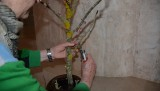 Atelier fleurir en liturgie